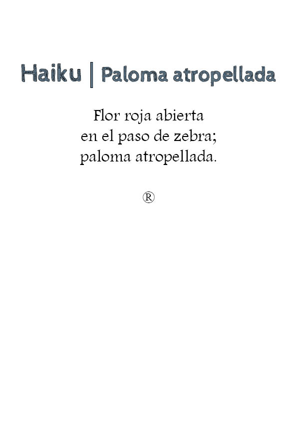 haiku- paloma atropellada